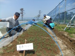 japan-replanting-tree
