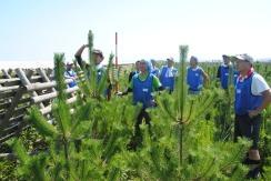 japan-tree-seedings