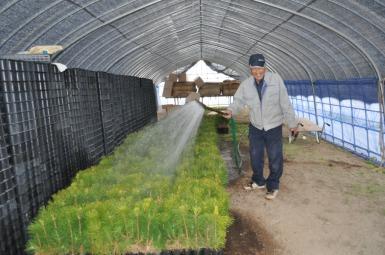 mori_watering_the_seedlings_in_preparation_for_transplanting