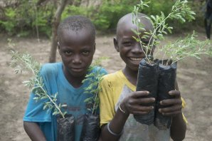 plant-tree-for-senegal-poor