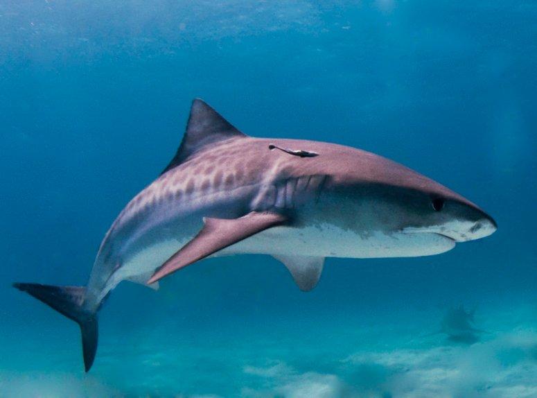safe-sharks.jpg