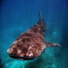 save-sharks
