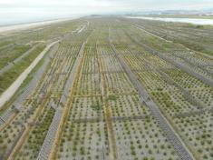 tey-por-yee-donated-to-japan-tree-planting